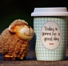 sheep and mug